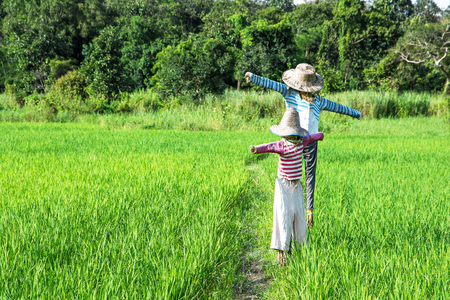 puppets: Closeup of scarecrows standing at green rice field with forest background