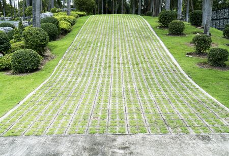 Concrete road with grass in public park background. Concrete block slope road with growth grass plant in the garden
