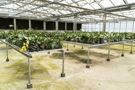 Orchid flower plant keeping in public greenhouse background. Orchid flowers tree plant keep on metal table in closed nursery