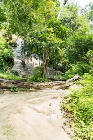Vertical Bua Tong or Buatong Limestone waterfall in the jungle in Chiang Mai, Thailand. Limestone waterfall in the forest background