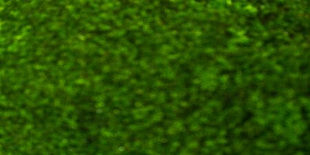 Panorama green blurred texture background. Panoramic blur green dot color abstract texture surface