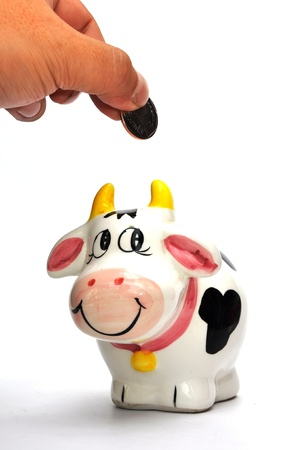 Cow coin box on white background photo