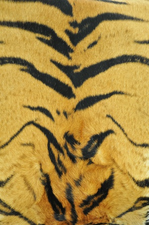 tiger skin pattern photo