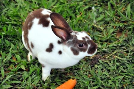 bunnie: Rabbit