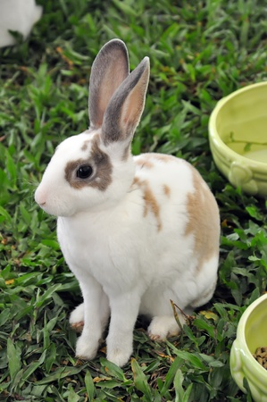 Brown spotted rabbit photo