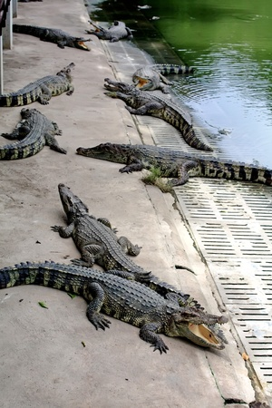 Crocodile Farm photo