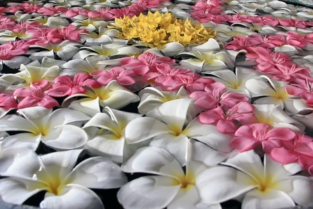 flowers in water photo