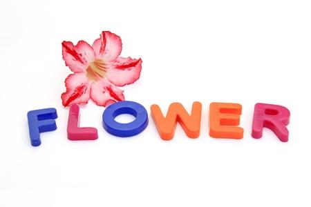 Colorful alphabet blocks. FLOWERS over white background photo
