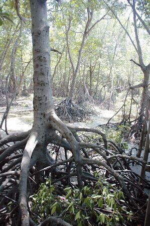 Root tree  photo