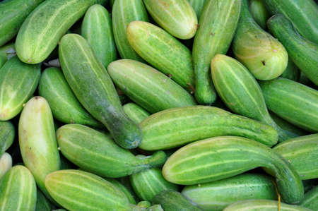 bunched: Cucumbers bunched together For Sale At Market