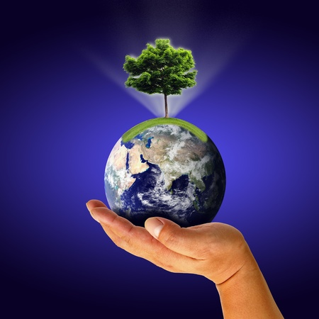 Male hand holding the Earth with tree photo