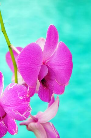 Purple orchid flower in garden photo