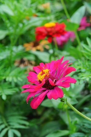 Purple flowers in the garden with beautiful of multicolored flowers photo