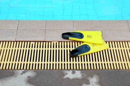 flipper: Nageoire jaune pr�s d'une piscine