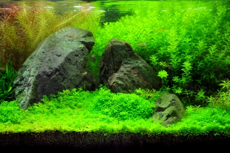 A beautiful planted tropical freshwater aquarium with fish Stock Photo