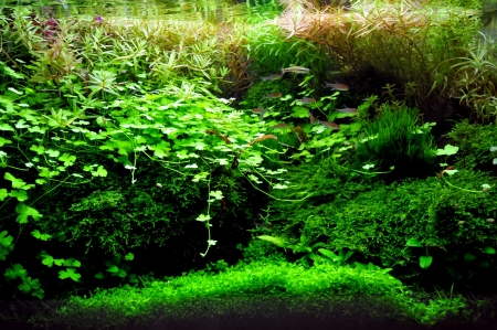 A beautiful planted tropical freshwater aquarium with fish Stock Photo - 20884202