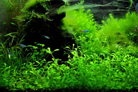 A beautiful planted tropical freshwater aquarium with fish Stock Photo - 20884203