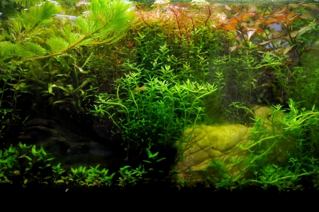 A beautiful planted tropical freshwater aquarium with fish Stock Photo - 20884204