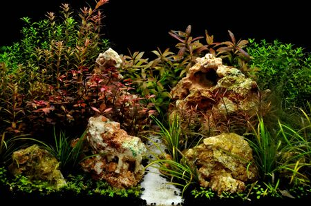 A beautiful planted tropical freshwater aquarium with fish Stock Photo - 20884206
