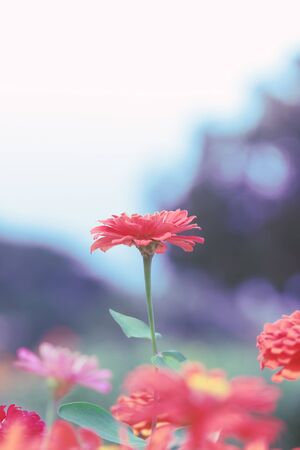 cross process: Beautiful flower on blur background, Selective focus. Cross process color.