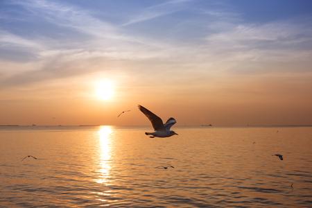Backlit Seagulls flying in sunset Stock Photo