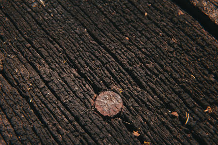 rusty nail: Rusty nail in old decayed wooden floor. Macro Stock Photo