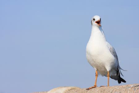 Alone seagull perches on rail bridge, background