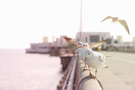 cross process: Seagull walks on bridges rail, funny looking Seagulls, Cross process color