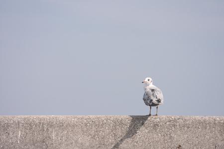 cross process: Alone seagull perches on rail bridge, Cross process color.