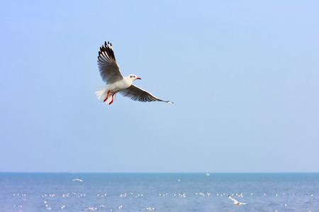 Seagull flying in sky. Stock Photo