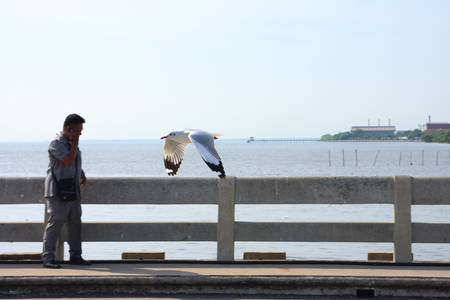 telephoning: Samut Prakan, Thailand - December 18, 2015: Seagull flying over tourist while telephoning at Bang Pu seaside-has many migratory birds live therefore there become tourist attractions