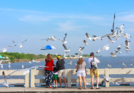 pu: Samut Prakan, Thailand - December 18, 2015: Tourists feeding birds while group of seagull fly over at Bang Pu seaside-has many migratory birds live therefore there become tourist attractions
