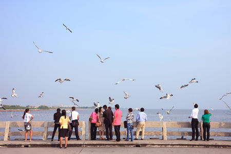 migratory birds: Samut Prakan, Thailand - December 14, 2015: Tourists enjoy watching and feeding seagulls at Bang Pu seaside-has many migratory birds live therefore there become tourist attractions Editorial