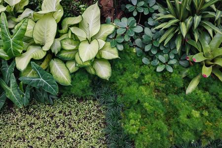 Top view of Green Indoor plants (House Plants)