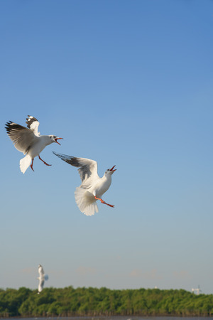 Seagulls snatching food in sky (space for text) Stock Photo