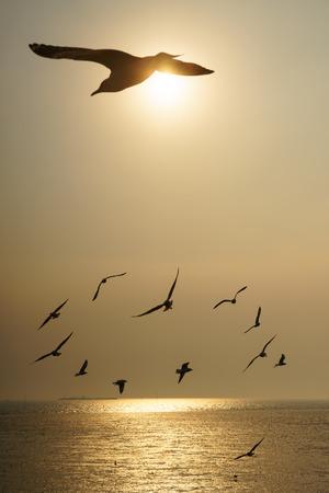 日没で飛んでいる鳥のバックライト付きグループ 写真素材