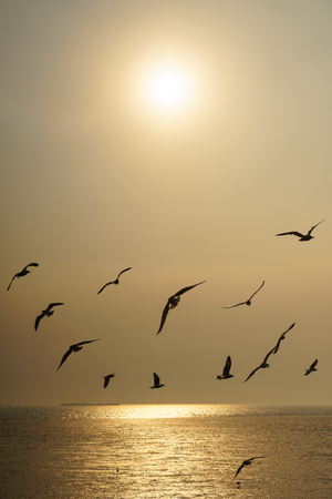 Backlit Group of birds flying at sunset