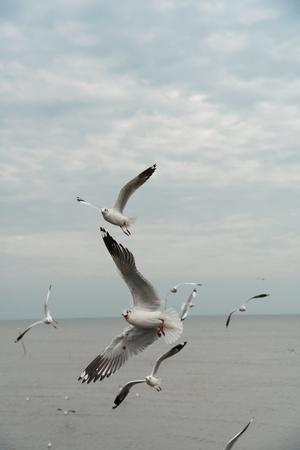 overturn: Seagull flips over on sky Stock Photo