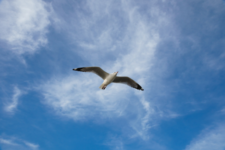 Bird flying on cloud and sky