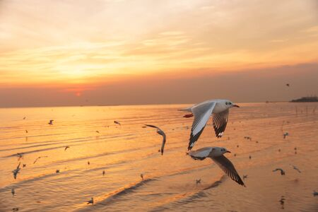 Seagulls flying at sunset during low tide Stock Photo