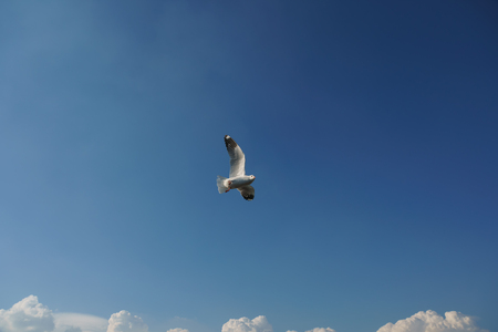 Bird keeping a vigilant watch on danger over cloud (space for text)