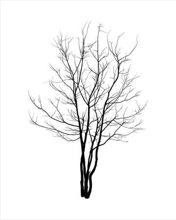 Silhouette of tree isolated on white background Vektorové ilustrace