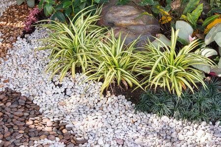 美化して植物と草の組み合わせ。