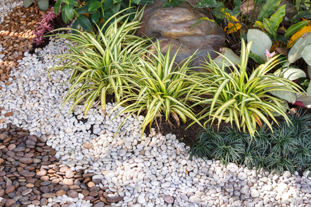 landscaped garden: Landscaping combinations of plant and grass.