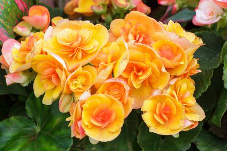 Abstracte achtergrond van oranje bloemen.