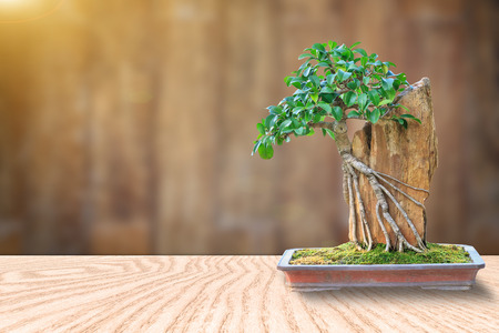 Bonsai tree in a ceramic pot on a wooden floor and blurred wooden background for design. Standard-Bild