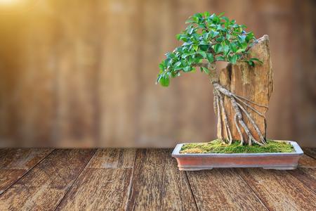 木製の床とデザインのレンズフレアと木製背景をぼかした写真にセラミック鍋に盆栽の木。 写真素材