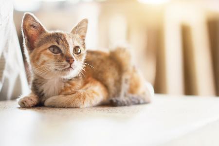 sitting on the ground: Orange tabby cat is sitting on the ground with sunlight. Cute little kitten portrait. Stock Photo