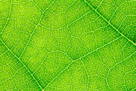 Leaf texture, leaf background for design. Leaf motifs that occurs natural. Stock fotó