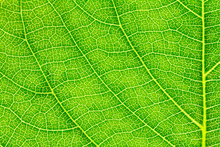 Leaf texture pattern for spring background, environment and ecology concept design.